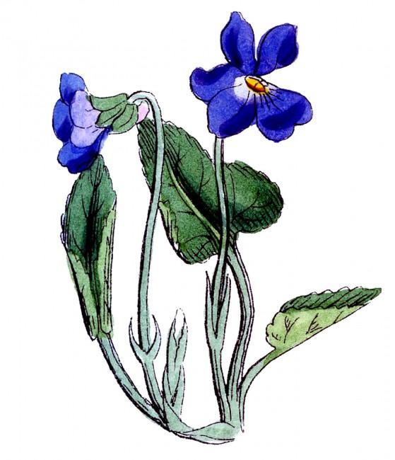 violet-flower-clip-art-Violet-Vintage-Image-Vintage-GraphicsFairy1